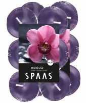 24x geurgeurkaarsen wild orchid paars 4 5 branduren